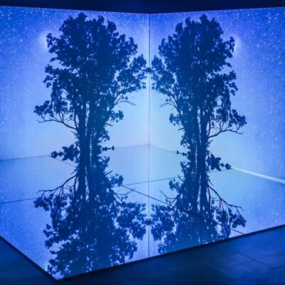 Amy Walsh, The Talking Earth, Installation View