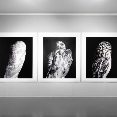 Martin Healy: 'The Augurs I, II, III', 2018, Archival Pigment Prints, 150 x 120cm each, Credit: Photography Roland Paschhoff